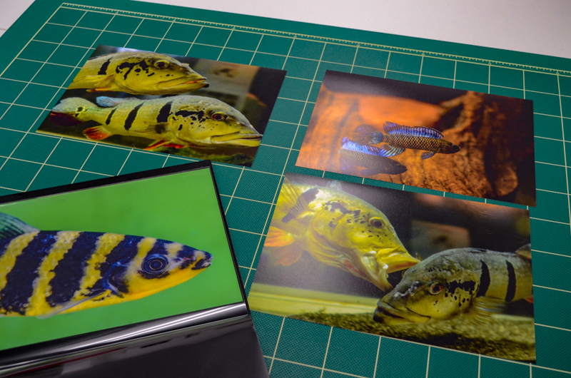 写真展「Face of Fishes」会期終了にあたり & ちょっとだけアディショナル・タイム。
